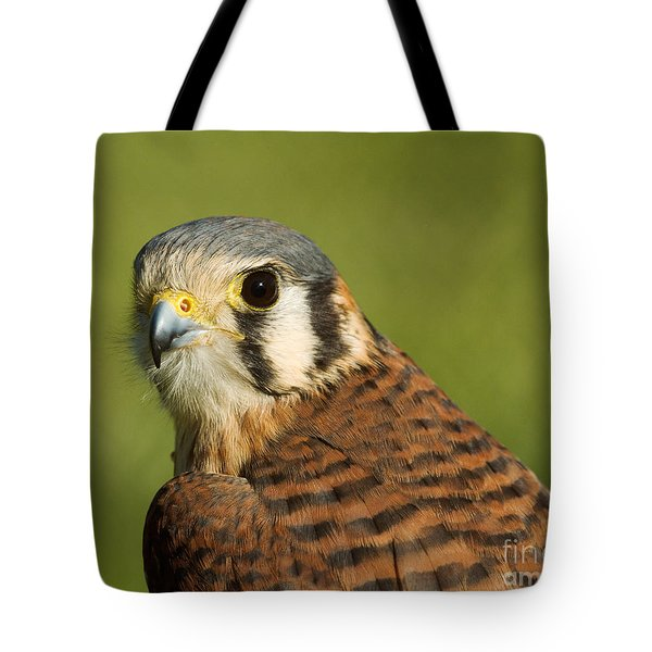 Tote Bag featuring the photograph female American Kestrel by Doug Herr