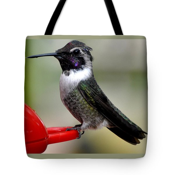 Tote Bag featuring the photograph Male Anna On Feeder Perch Posing by Jay Milo