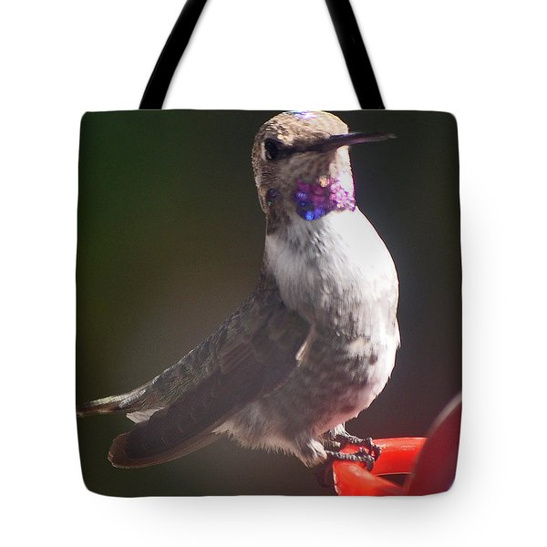 Tote Bag featuring the photograph Female Anna On Perch by Jay Milo