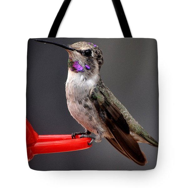 Tote Bag featuring the photograph Female Anna's Hummingbird On Perch Posing For Her Supper by Jay Milo