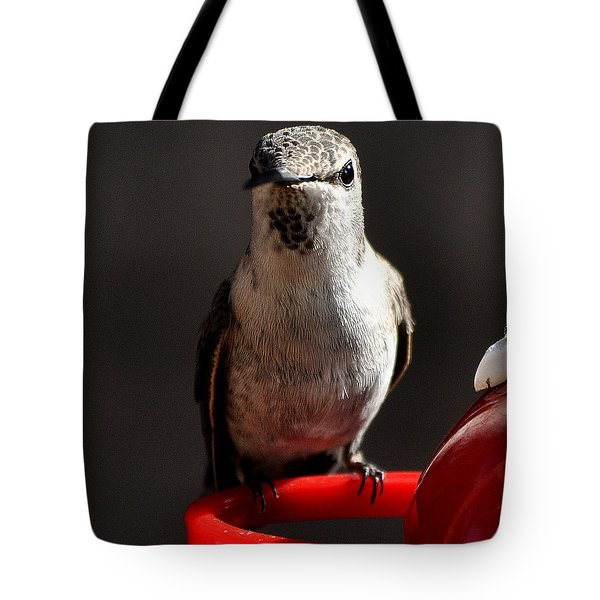 Tote Bag featuring the photograph Female Anna Hummingbird by Jay Milo