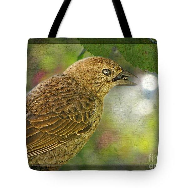 Female Brownheaded Cowbird Tote Bag