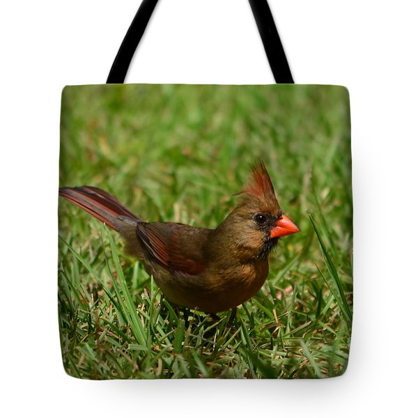 Tote Bag featuring the photograph Female Cardinal by Bob Sample