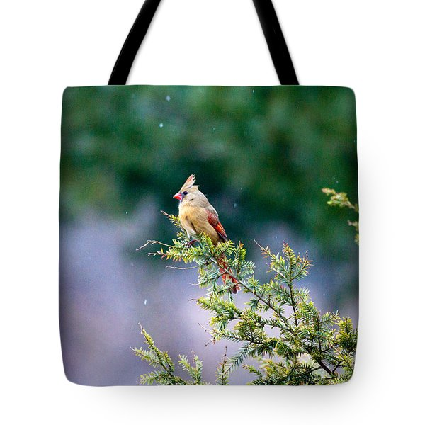 Female Cardinal In Snow Tote Bag by Eleanor Abramson