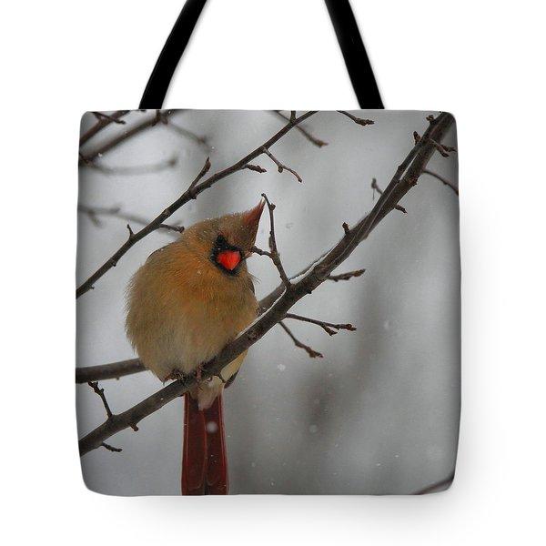 Female Cardinal In Winter Tote Bag