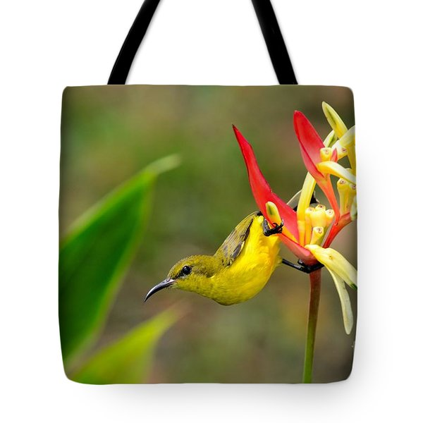 Female Olive Backed Sunbird Clings To Heliconia Plant Flower Singapore Tote Bag
