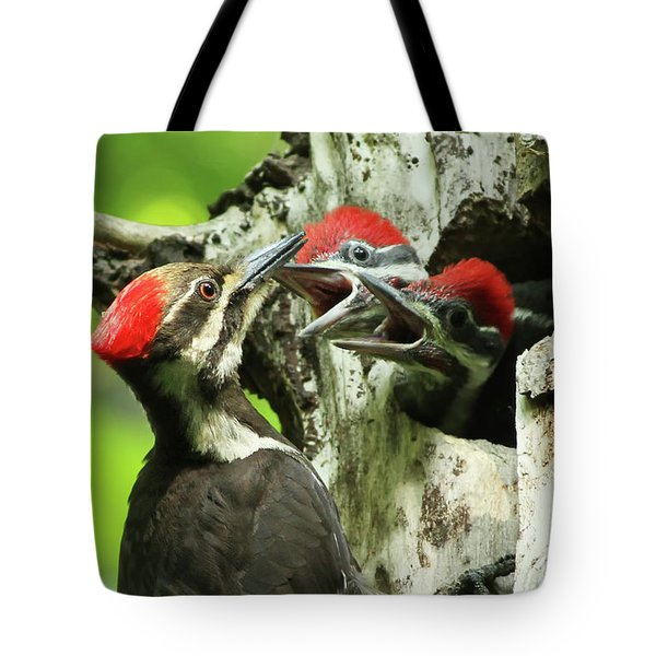 Female Pileated Woodpecker At Nest Tote Bag by Mircea Costina Photography