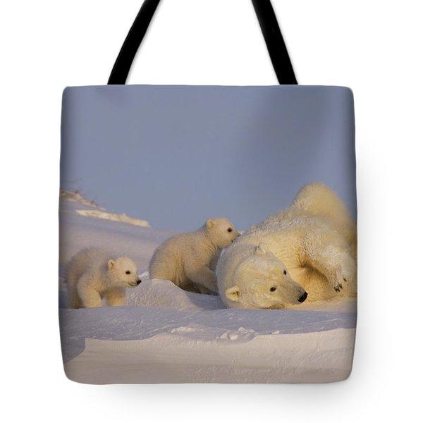 Female Polar Bear Cleans Her Coat Tote Bag