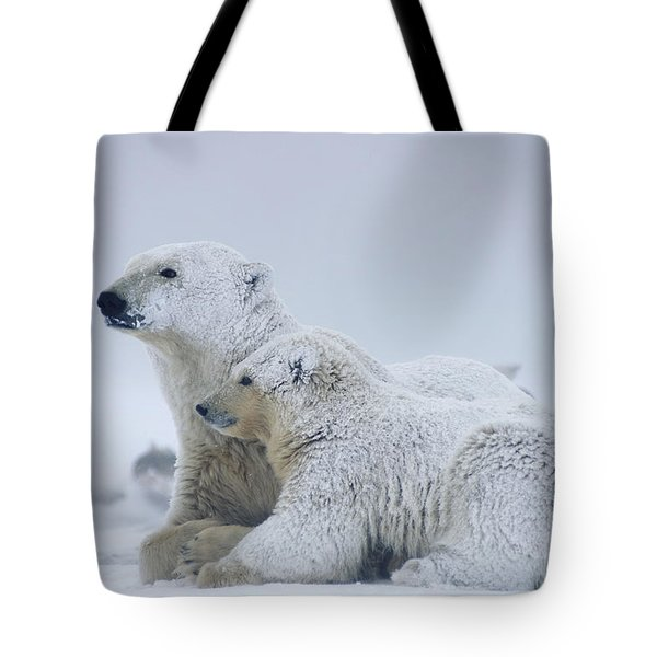 Female Polar Bear Resting With Her Two Tote Bag
