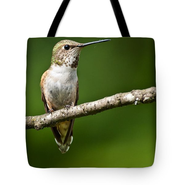 Tote Bag featuring the photograph Female Rufous Hummingbird In A Tree by Jeff Goulden