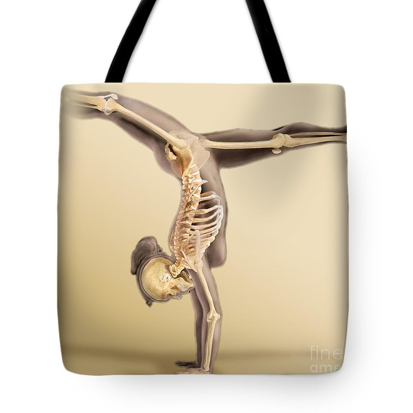 Female Skeletal System Tote Bag by Anatomical Travelogue