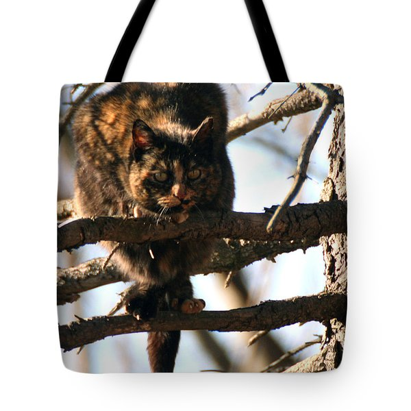 Feral Cat In Pine Tree Tote Bag