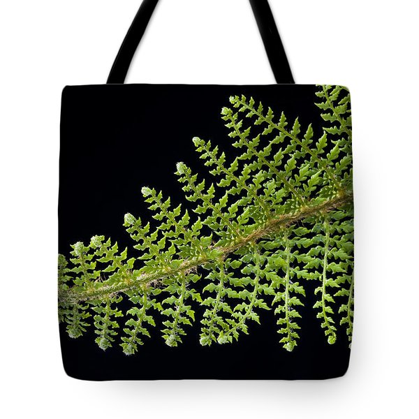 Fern With Raindrop 2 Tote Bag by Trevor Chriss