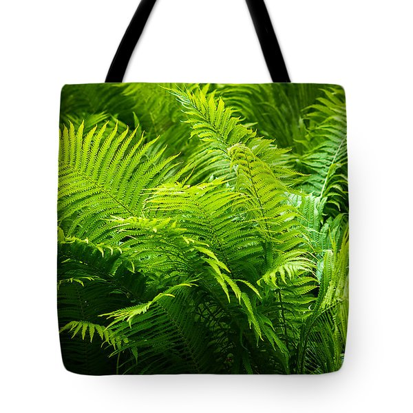 Ferns 1 Tote Bag by Alexander Senin