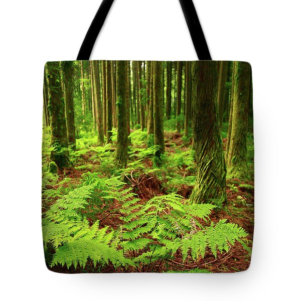 Ferns In The Forest Tote Bag by Gaspar Avila