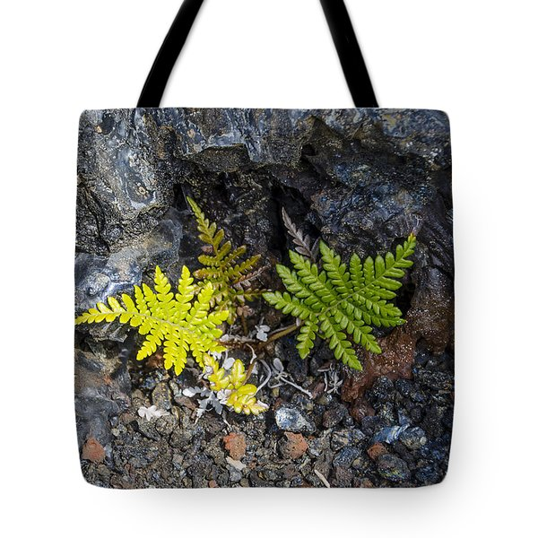 Ferns In Volcanic Rock Tote Bag