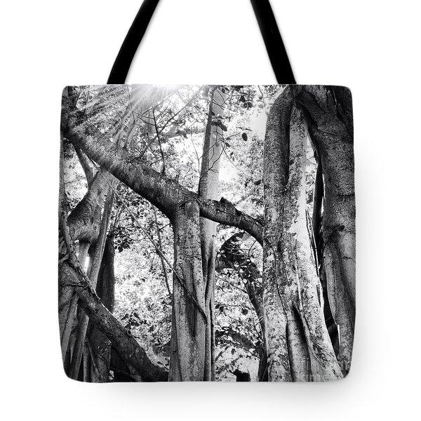 Ficus Altissima In Black And White Tote Bag