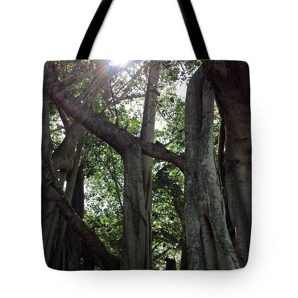 Ficus Altissima Tote Bag
