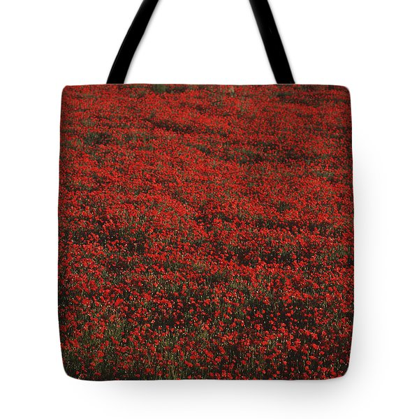 Field Of Red Poppies Tote Bag by Ian Cumming