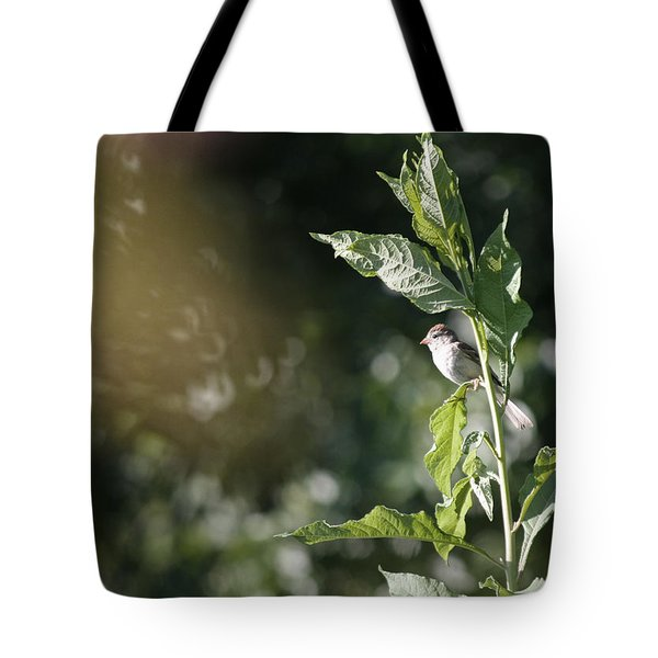 Field Sparrow Tote Bag by Melinda Fawver