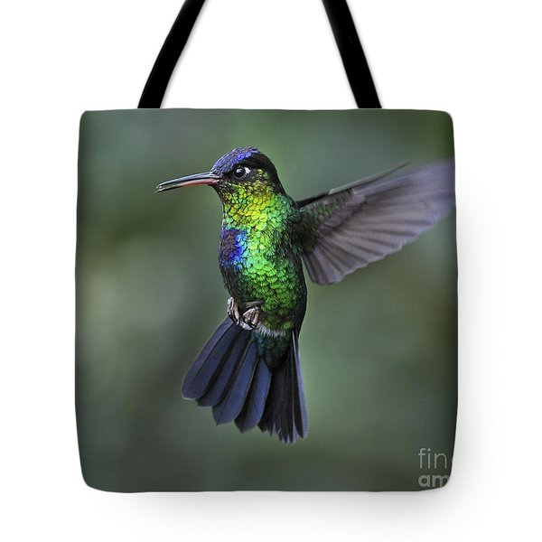 Fiery-throated Hummingbird..  Tote Bag