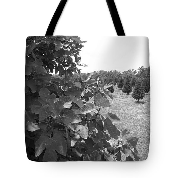 Fig Tree Tote Bag