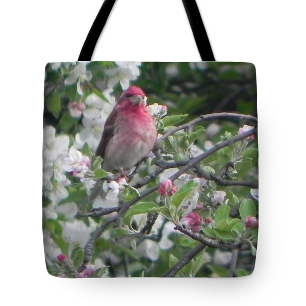 Finch In Apple Tree Tote Bag by Christine Lathrop