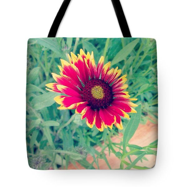 Fire Daisy Tote Bag by Thomasina Durkay