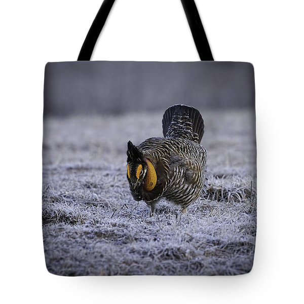 First Light 4 Tote Bag by Thomas Young