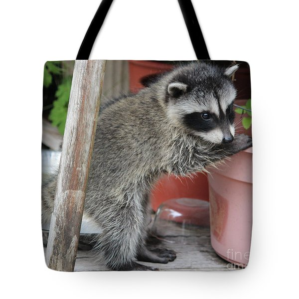 First Look At Baby Coonie Tote Bag by Kym Backland