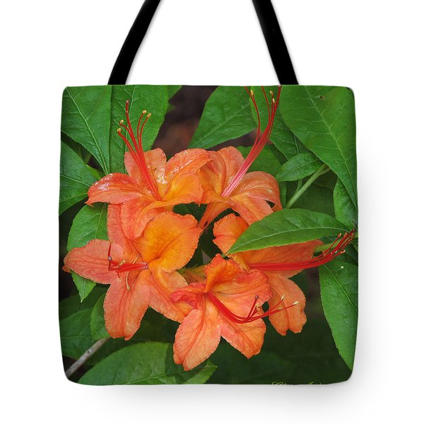 Flame Azalea Tote Bag by Chris Anderson
