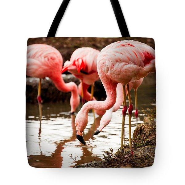 Flamingo Food Search Tote Bag