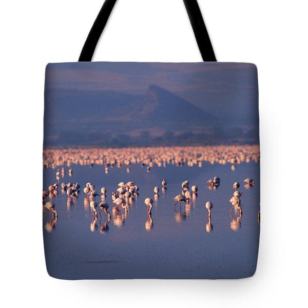 Flamingoes, Rift Valley, Kenya Tote Bag