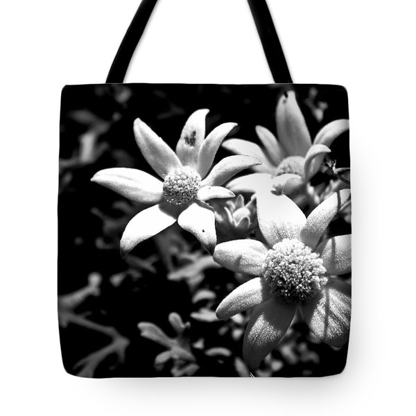 Tote Bag featuring the photograph Flannel Flower by Miroslava Jurcik