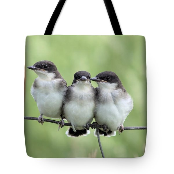 Fledged Siblings Tote Bag by Bonfire Photography