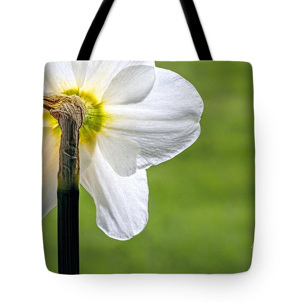 Flipside Of A Daffodil Tote Bag by Madonna Martin