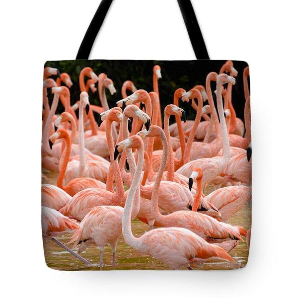 Flock Of Flamingoes Tote Bag