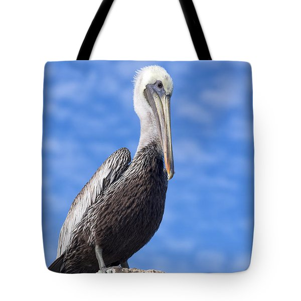 Florida Brown Pelican Tote Bag