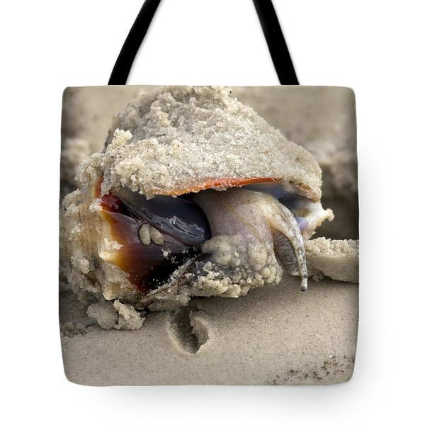 Tote Bag featuring the photograph Florida Fighting Conch by Meg Rousher