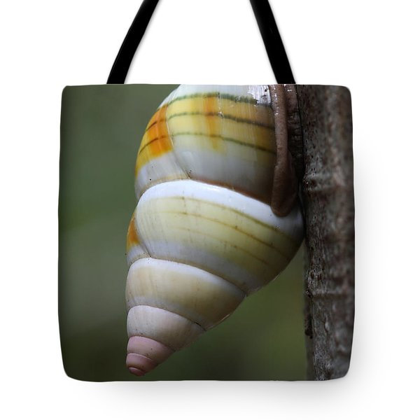Tote Bag featuring the photograph Florida Tree Snail by Paul Rebmann