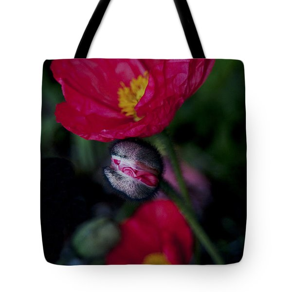 Tote Bag featuring the photograph Flower Bud by Haleh Mahbod