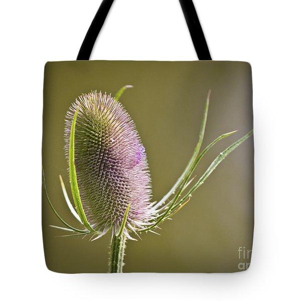 Flowering Teasel. Tote Bag