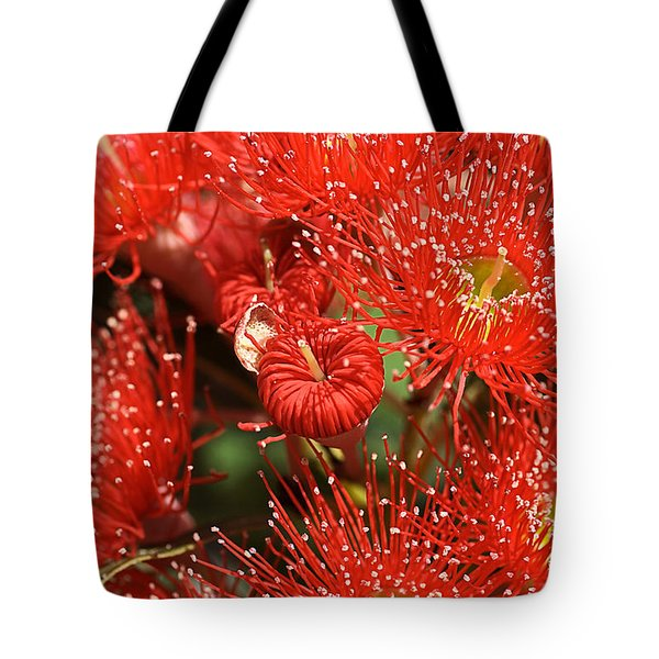 Flowers-red Eucalyptus-australian Native Flora Tote Bag by Joy Watson