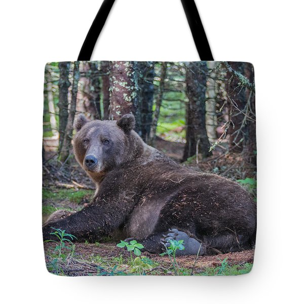 Forest Bear Tote Bag by Chris Scroggins