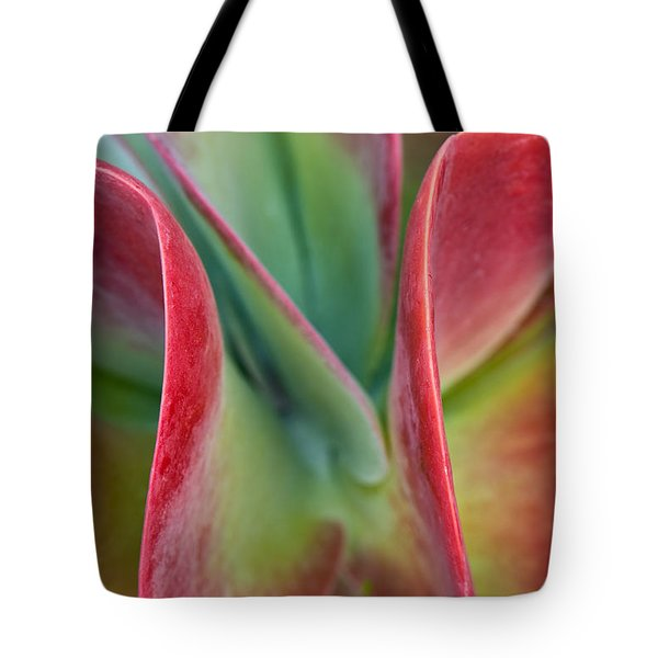 Curves Tote Bag by Jean-Pierre Ducondi