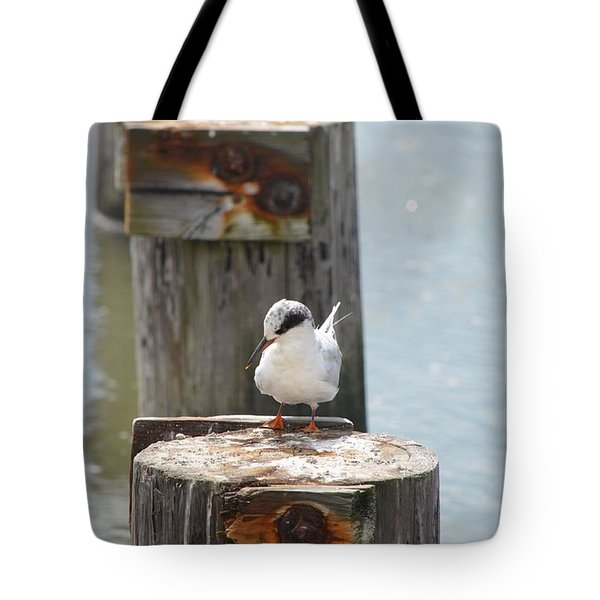 Forster's Tern Tote Bag by James Petersen