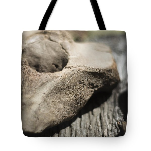 Tote Bag featuring the photograph Fossil Bone With Weathered Wood by Rebecca Sherman