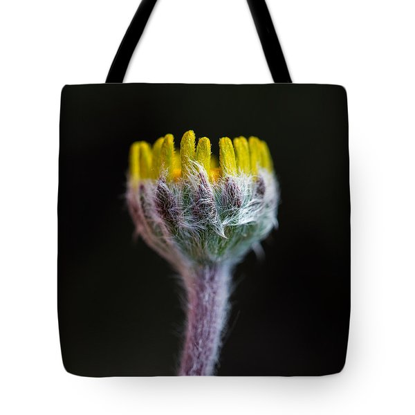 Four-nerve Daisy Bud Beginning To Open Tote Bag