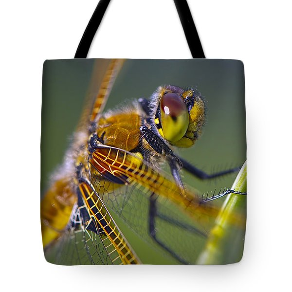 Four Spotted Chaser Tote Bag by Sharon Talson