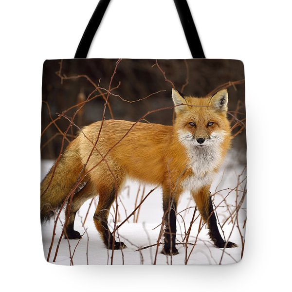 Fox In Winter Tote Bag